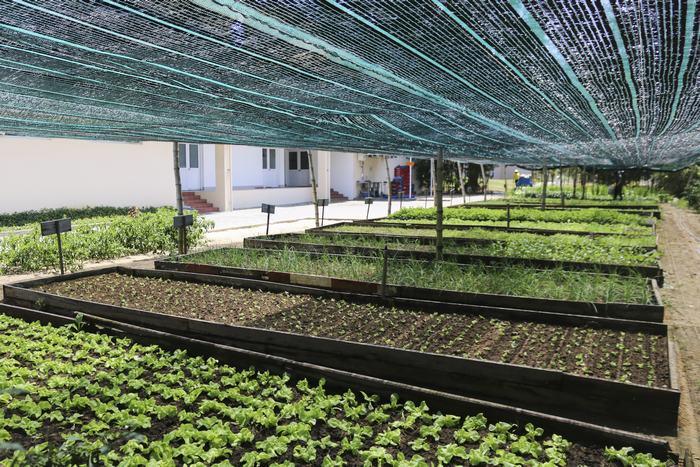 Vườn rau hữu cơ mướt xanh trong khuôn viên khách sạn