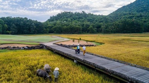 The water buffalo act as bio-mowers and help to maintain the rice paddies on the course
