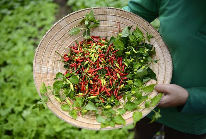 Organic Garden (1)